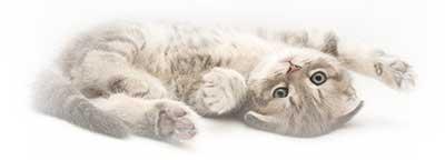 cat-fur